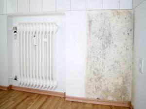 Плесневой грибок на стенах в квартире от сырости
