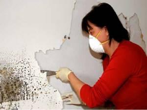 Избавление от плесени на стенах