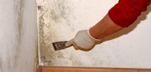 Как избавиться от плесени на стенах в квартире: современные и народные средства