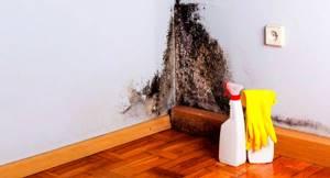 Пятерка отличных способов чтобы вывести плесень из дома
